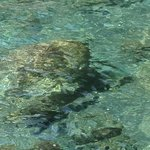 Chrystal clear water