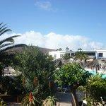 l'oasis de palmiers