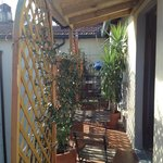 Терраса-балкон,вся в зелени