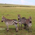 Wonderful landscapes and AMAZING wildlife