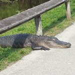 One of the natives getting a little to friendly in the Everglades