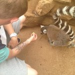 Feeding the lemurs!