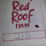 Bedbugs @ Red Roof Inn on W Broad St Columbus OH