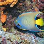 Gorgeous Sealife in Bonaire!