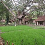 The paddy field among the bungalows