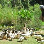 duck feeding time