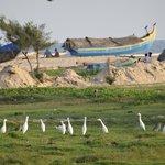 Fishing boat and egrets