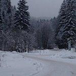 Forests round Kamenny Mlyn