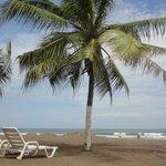 Cocos en la playa, uno de los pocos sitios para tomar sombra