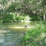 Lower creek area