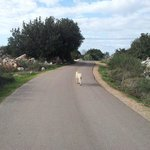 Walking around the village