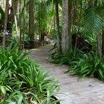 Rainforest landscapiung