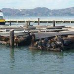 Pier 39 , CA., San Francisco USA.