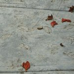 Leaf imprints on cement