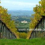 marronaia