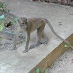 pesky monkeys