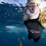 Shark snorkeler swims with blacktip sharks of Aliwal Shoal