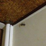 Наш номер был на первом этаже и к нам иногда заглядывали вполне безобидные гости