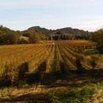 Vineyard on PlanAlvy