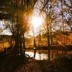 Summer sun on pond