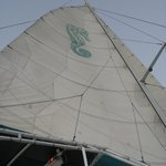 Seahorse sail