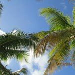 View looking up from my lounge chair