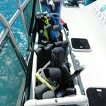 Snorkel gear ready to go swimming with the dolphins