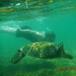 Ron took us snorkeling and we were able to swim with the sea turtles! He knows the best places s