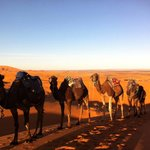 Nomads life with camels