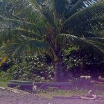 Kokosnusspalmen direkt am Haus!