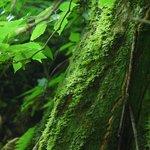Rain Forest Moss