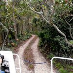 Swamp Buggy ride through the jungle