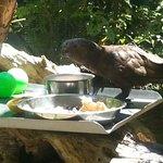 In the bird enclosure