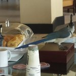 Sneaky Sugar Stealing Bird