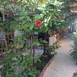 giardino interno