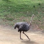 View from my balcony; a friendly Ostrich
