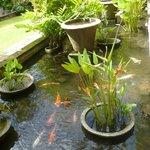 Koi pond/garden