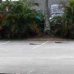 Where iguanas rule