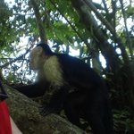 Monkeys visit