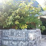 Tiger World where lots of white tiger are breed