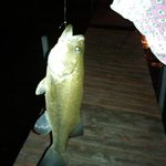 """16"""" Bass Caught from Pier at the Resort"""