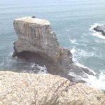 more gannets