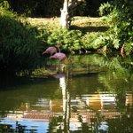 flamingos on property