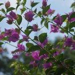 Hibiscus Gardens