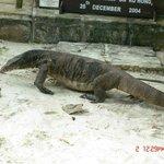 jimmy the lizard