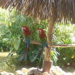 Perroquets qui vous accueillent à votre arrivée