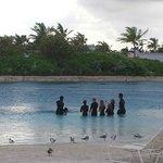 Mergulho com Golfinho