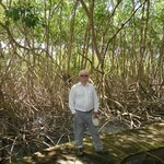 mangrove swamp in grounds