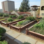Rooftop herb garden for restaurant