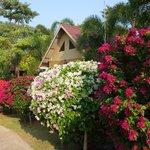 Jardin très bien entretenu
